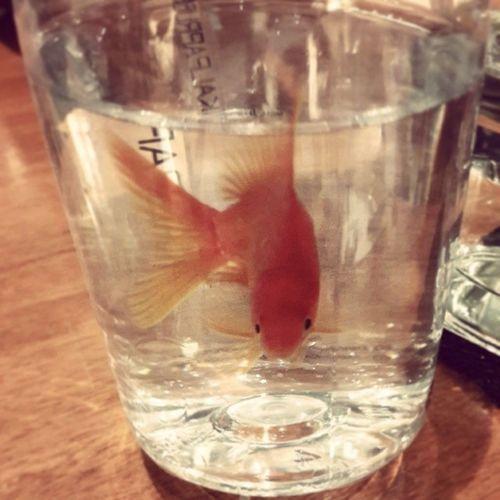 Fisho In the bottle