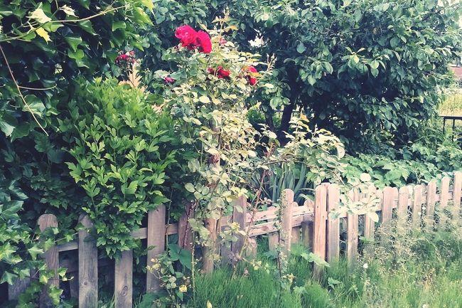 Cottage Garden  Garden Spring