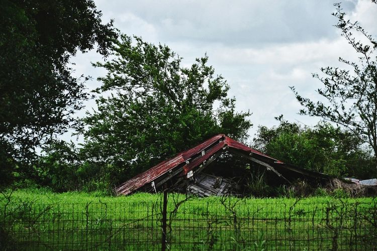 In pieces Tree Sky No People Growth Day Cloud - Sky Nature Green Color Roof Outdoors Beauty In Nature Grass Architecture Rustic Style Neglected Architecture Deterioration Abandoned Buildings South Louisiana Farmhouse Rustic Landscape Rural Scene Barn Abandoned Abandoned & Derelict