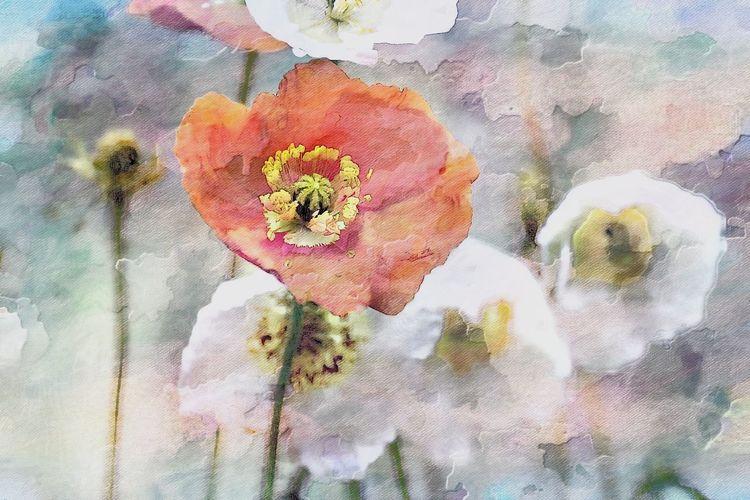 Full frame shot of white rose