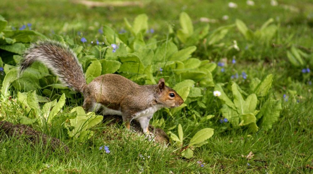 Animal Wildlife Animals In The Wild Day Field Full Length Grass Green Color Land Mammal Nature No People One Animal Plant Rodent Side View Squirrel Vertebrate