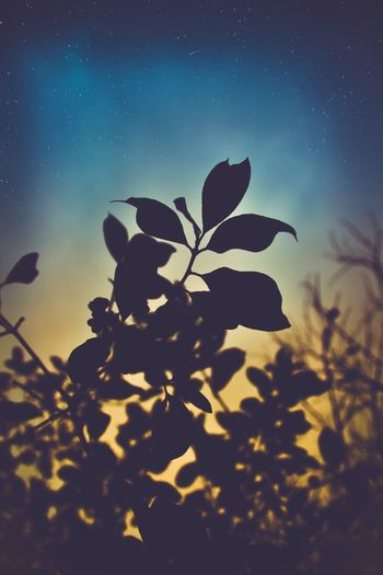 Night Stars Sky Silhouette Nature Idyllic Dark Outdoors Beauty In Nature Shootingstar LongTerm Star Starry Night Beautiful Romantic Leaf Tree Blue