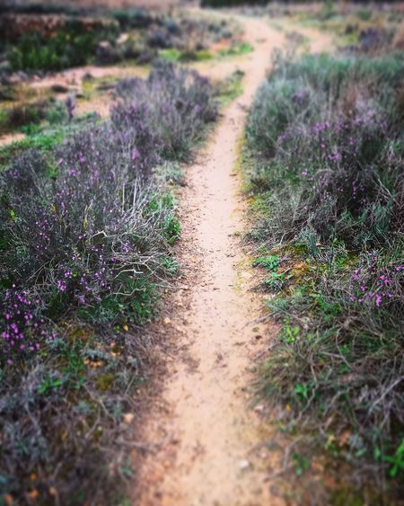 Follow your path UNESCO World Heritage Site Blessedandthankful Mobilephotography Beautiful Energy Beautiful Nature Nature Flower Field Landscape Growth Beauty In Nature The Way Forward Tranquility