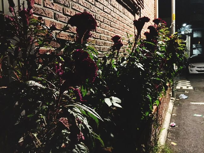 Wall - Building Feature Plant Flower Korea Photos Street Photography Street Night