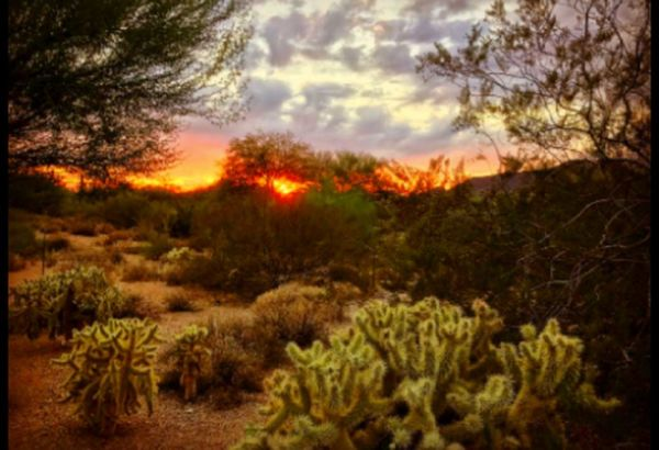 Scottsdale Arizona Nature Tree Plant Cloud - Sky No People Outdoors Scenics Landscape Beauty In Nature Growth Forest Sky Grass Day Geology Physical Geography Tranquility Environment Nature_collection Getty Images EyeEm Gallery Getty+EyeEm Collection Sunset Silhouettes Arizona Sunset Sunset