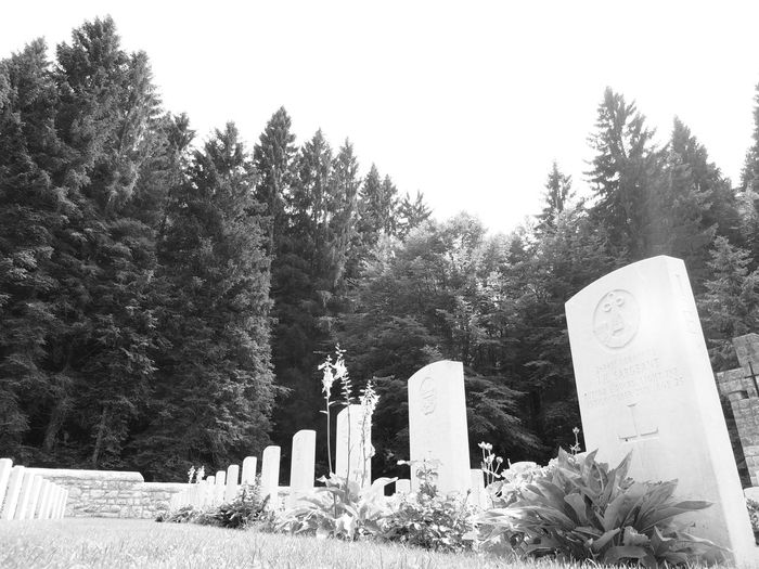 Clear Sky Day Growth Nature No People Outdoors Pine Tree Scenics Solitude Sunny Tranquil Scene Tranquility Tree Cemetery EnglishCemetery Blackandwhite Blackandwhite Photography Black & White Blackandwhitephotography Firstworldwar Firstworldwarlocation Primaguerramondiale Primaguerra Soldiersmonument Soldiers