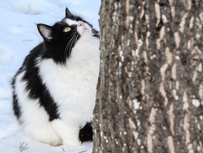 Close up of cat on snow