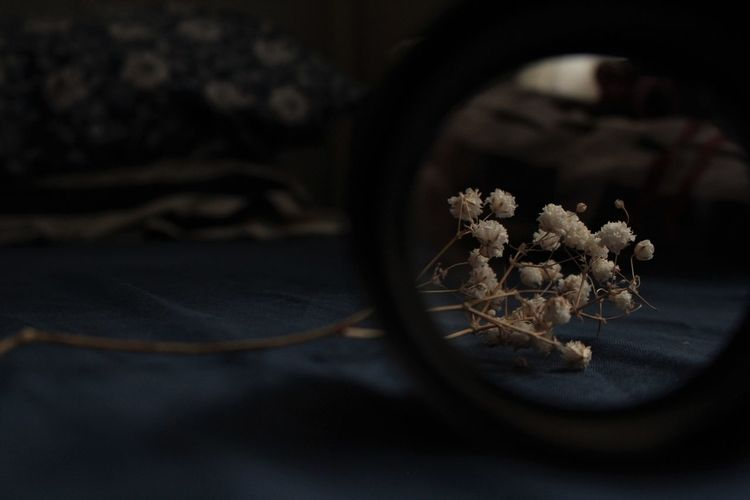 High angle view of flowers seen through magnifying glasses on table