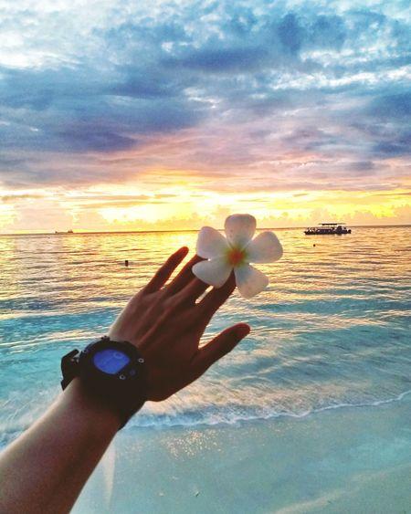 Can't get better than this! 💫 Saipan Northern Mariana Islands Home Islandliving Islandlife Islandvibes EyeEmNewHere Stressfree Paradise Sunset Beach Oceanview Plumeria Flower Beauty In Nature PhonePhotography Samsungphotography Human Hand Eyesight