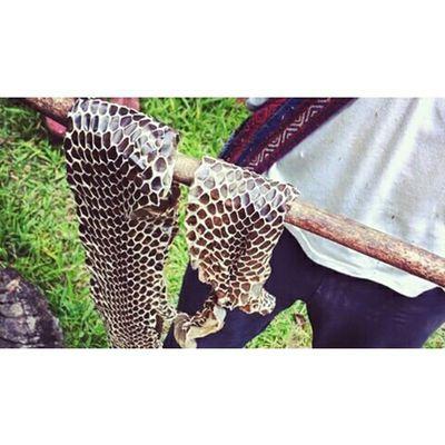 อุ้ย ผึ้งๆๆ Snake Enjoying Life Traveling Thailand Culture Kaosok Suratthani