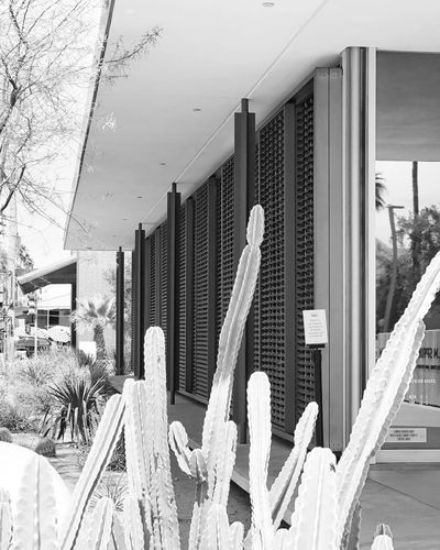Mid Century Modern Architecture in Palm Springs Modern Architecture Bank Palm Springs Minimalism_bw Minimalism Mid Century Architecture Mid Century Modern Leading Lines Perspective Photography Metal Columns Metal Structure Roof Structure Screening Screen Cactus Architecture_bw Architecturephotography Architecture_collection Architecture EyeEm Selects Outdoors Day City