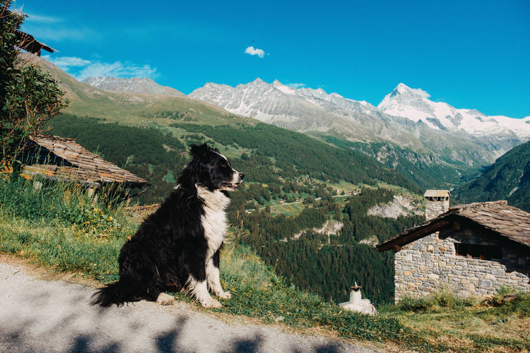 View of a dog on landscape against mountain range