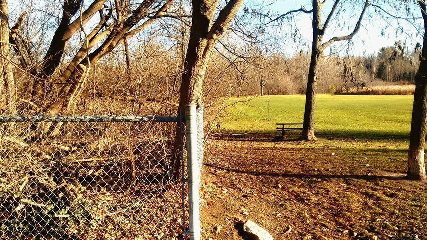 Manvswild Separated Fine Line Park Autumn Colors Autumn Autumn 2015 Autumn Collection Fence Fences & Beyond Chasing Chain Link Fences Picnic Tables