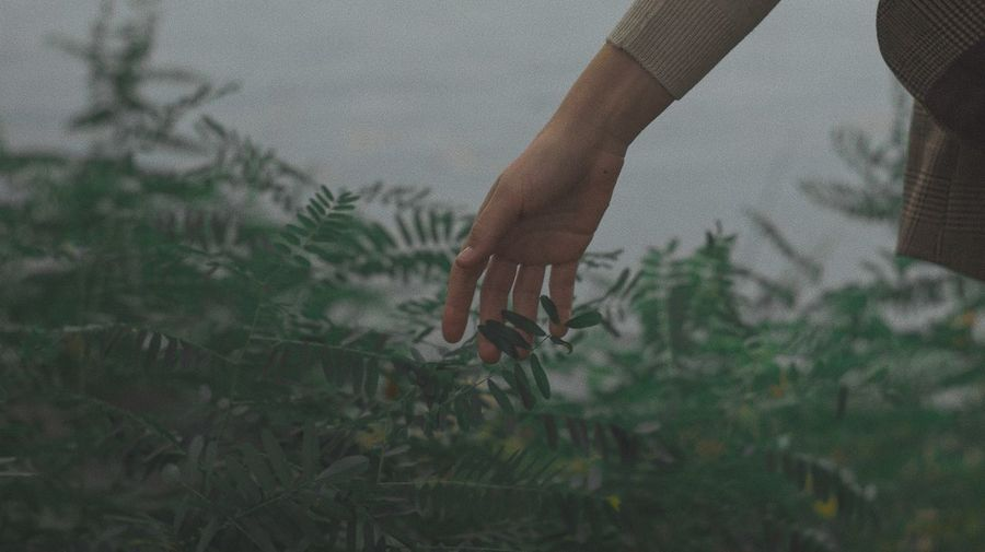 Midsection of person holding plants