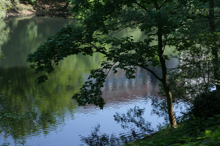 Fennsee Fennsee Forest Lake Nature No People Reflection Tree Water Waterfront First Eyeem Photo