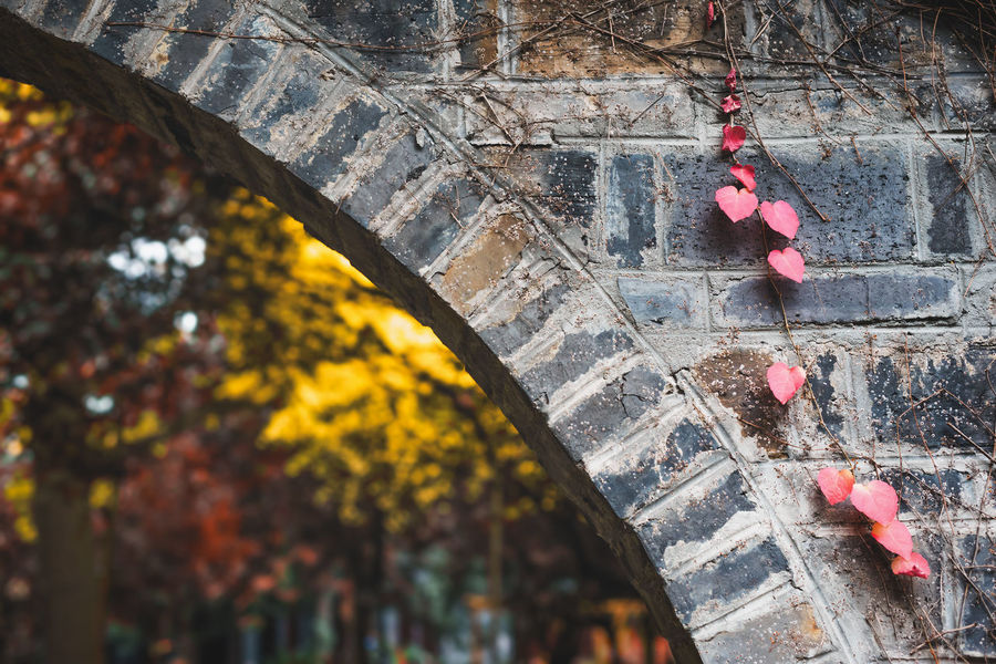 red leaves Day No People Red Architecture Outdoors Nature Built Structure Plant Wall - Building Feature Building Exterior Wall Close-up Flower Flowering Plant Solid Stone Wall Autumn Selective Focus Tree Leaf