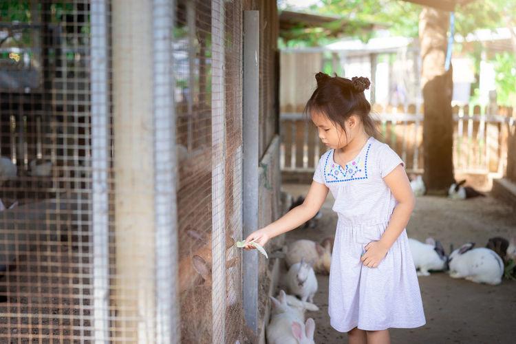 Animal Asian