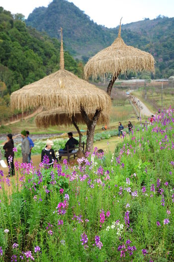 AngKhang Station Beauty In Nature Flower Flowers Fresh Place Freshness Garden Mountain Nature Scenics Thailand Thatched Roof Travel Destinations Tree