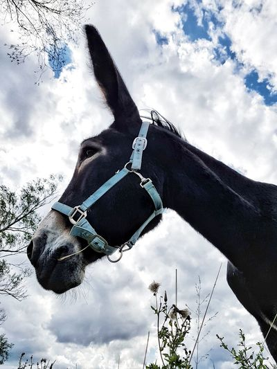 Cloud - Sky Domestic Animals Outdoors One Animal Animal Themes Pet Portraits Donkey Nature Close-up Mammal Rural Scene Rural Animal Head Day Sky Animal Photography