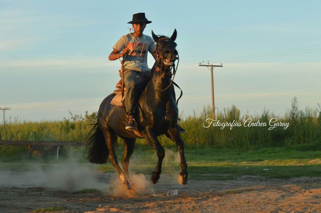 Horse Horseback Riding Horses Horse Life ❣