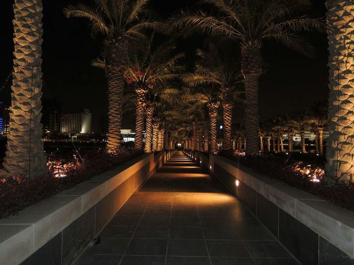Illuminated footpath amidst date palm tree at night