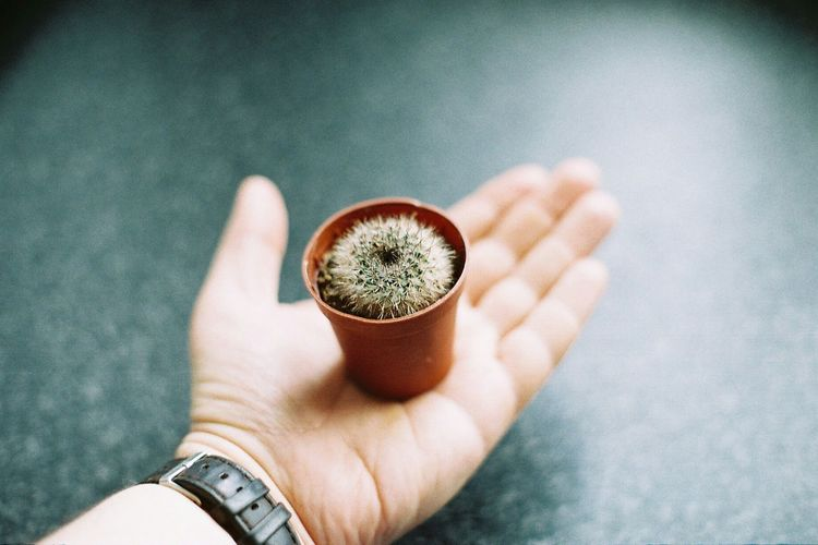 Cactus Cactuslover Cactusplants Cactus Plant Holding Human Body Part Human Hand Close-up Indoors  Plant House Plant