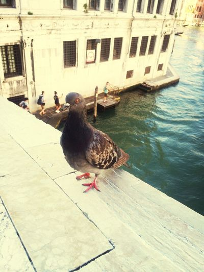 Venezia Italy Summer