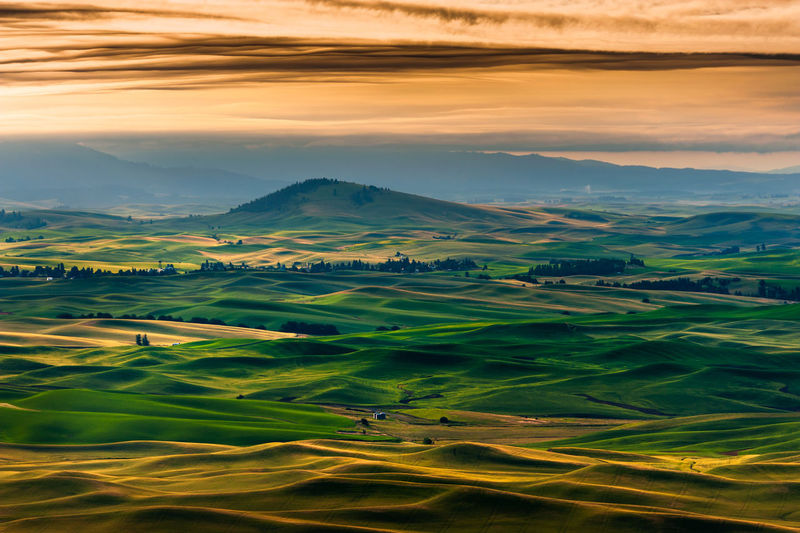 Sunrise in the Palouse Area of Eastern Washington. The Palouse area of eastern Washington state is known for it's huge expanse of wheat and lentil fields. Here the hills are rimmed with low light from a beautiful early sunrise. Seen here from Steptoe Butte State Park. Scenics - Nature Beauty In Nature Tranquil Scene Landscape Environment Tranquility Sky Agriculture Cloud - Sky Idyllic Green Color Rural Scene No People Field Nature Non-urban Scene Land Mountain Farm Outdoors Rolling Landscape Steptoe Butte Sunrise Steptoe Butte State Park Farm Farmland Washington Washington State Steptoe Dawn State Park  Colfax Wheat Agriculture Agricultural Field Agricultural Land Summer Travel Destinations Travel Travel Photography