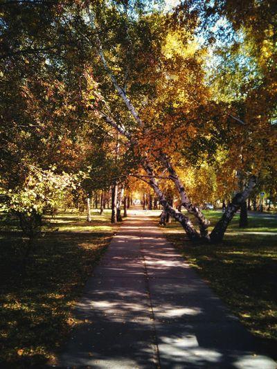 Tree Autumn The