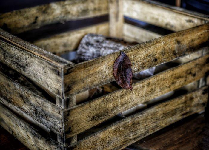 The Box Wood