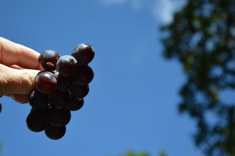 Midsection of person holding fruit against sky