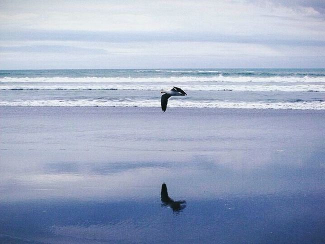 Blue, Green, Grey Newzealand Reflection Mirror Image Bird Beach The Perfect Moment Perfect Timing Blue Grey