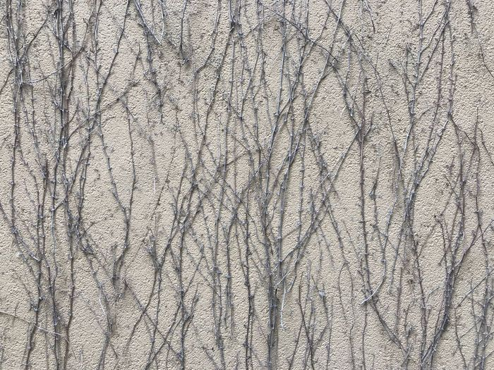 Growth Plant Pattern Full Frame Backgrounds Textured  Textile No People Close-up Day Repetition Material Wrinkled