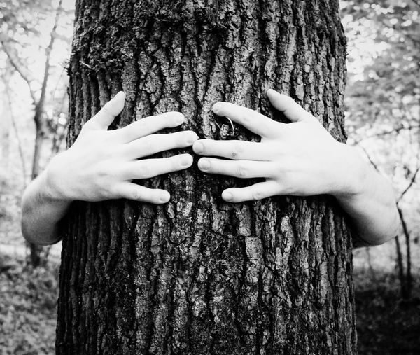 Cropped Hands Holding Tree Trunk In Forest