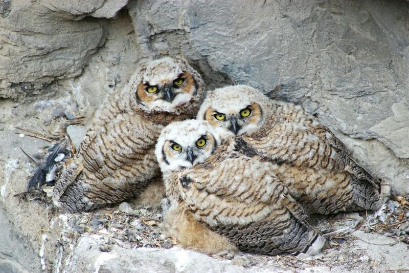 Owls💕 Baby Owl Birds Staring At Me Beautiful Creatures Big Eyes
