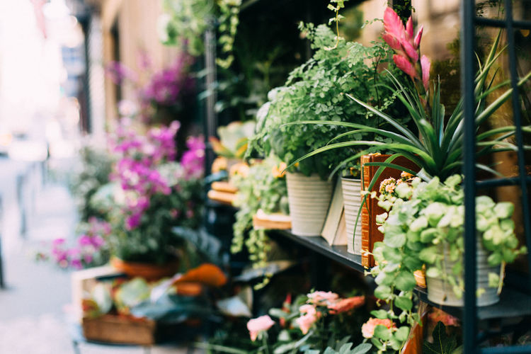 Flower pots at store for sale