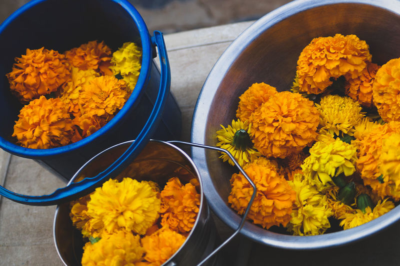 Flowers Maire Gold Flowers,Plants & Garden Flowers, Nature And Beauty Flowers_collection Flowerslovers Beauty In Nature Close-up Nature Beautifully Organized