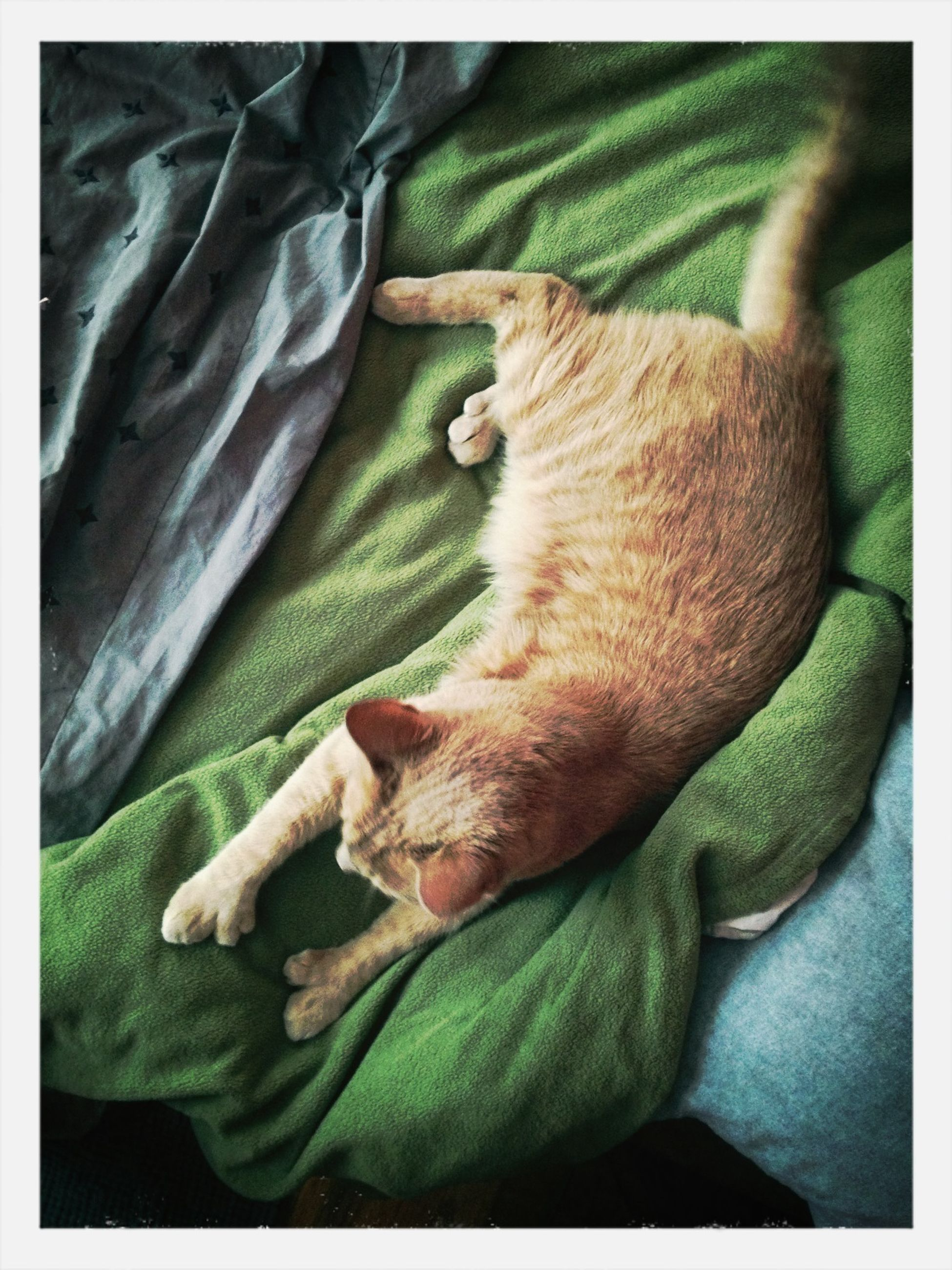 animal themes, transfer print, one animal, pets, domestic animals, auto post production filter, sleeping, mammal, indoors, relaxation, resting, lying down, high angle view, green color, dog, close-up, domestic cat, bed, cat, zoology