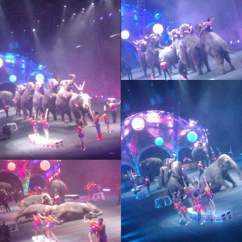 att the circus. ^__^ i have a lil thing for elephants. (: