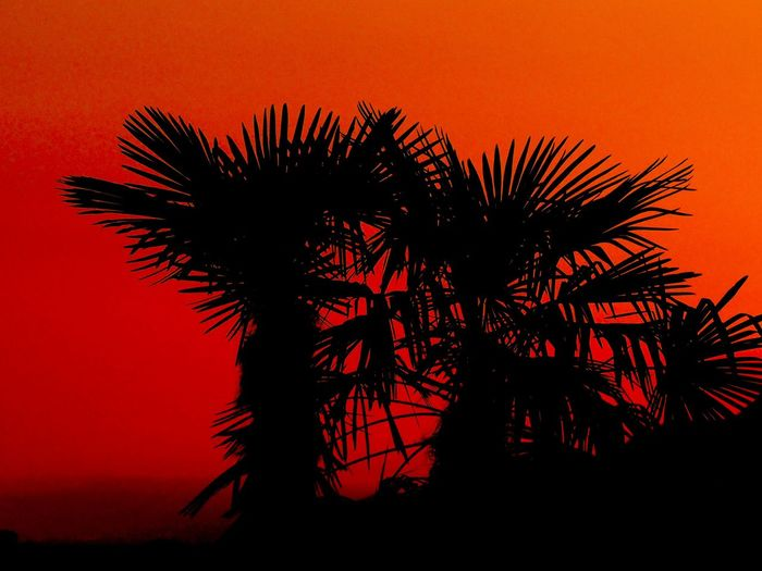 Low angle view of palm tree against orange sky