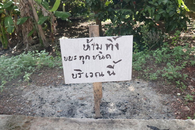 Close-up Communication Day Direction Growth Guidance Information Information Sign Message Nature No People Non-western Script Outdoors Placard Plant Script Sign Text Thai Sign Thai Text Tree Warning Sign Western Script