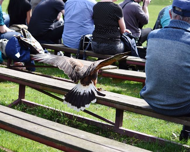 Showcase April Outdoor Photography Human And Animal Connection Bird Of Prey Landing Wide Wings Movement Flying Low Man In The Park People Sitting Together Park Benches Bird Photography Urbanphotography Landscape Capture The Moment