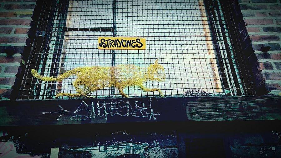 Stray Ones Kitty Cat Streetart #street #streetphotography #tagsforlikes #sprayart #urban #urbanart #urbanwalls #wall #wallporn #graffitiigers #stencilart #art #graffiti #instagraffiti #instagood #artwork #mural #graffitiporn #photooftheday #stencil #streetartistry #photograp Streetart Urbanexploration Williamsburg, Brooklyn  Travel Photography Traveling