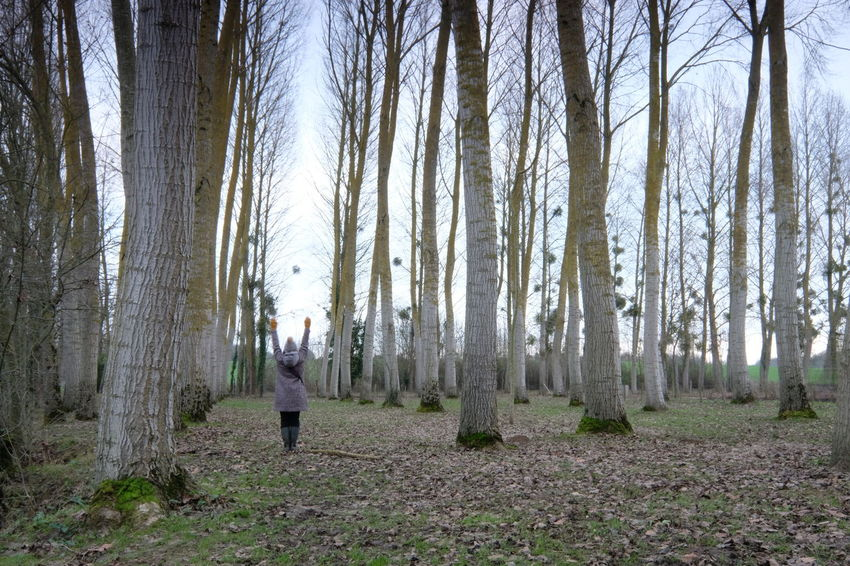Forest Tree Land One Person Plant WoodLand Standing Full Length Tree Trunk Trunk Nature Adult Rear View Day Casual Clothing Tranquility Walking Growth Non-urban Scene Outdoors