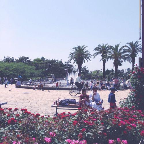 陽射し眩しぃ☀︎ Sunshine! Dazzling_shots Hamadera-park Rosé Beautiful Day Sunglasses👓 Osaka Japan