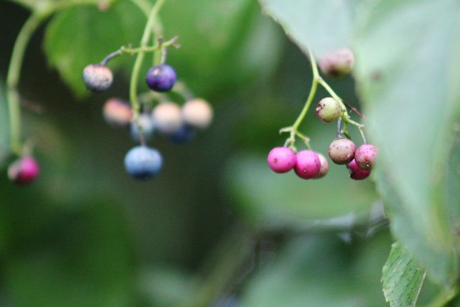 fall is coming Tree Flower Branch Fruit Flower Head Close-up Plant Food And Drink Plant Life Twig Unripe Bud
