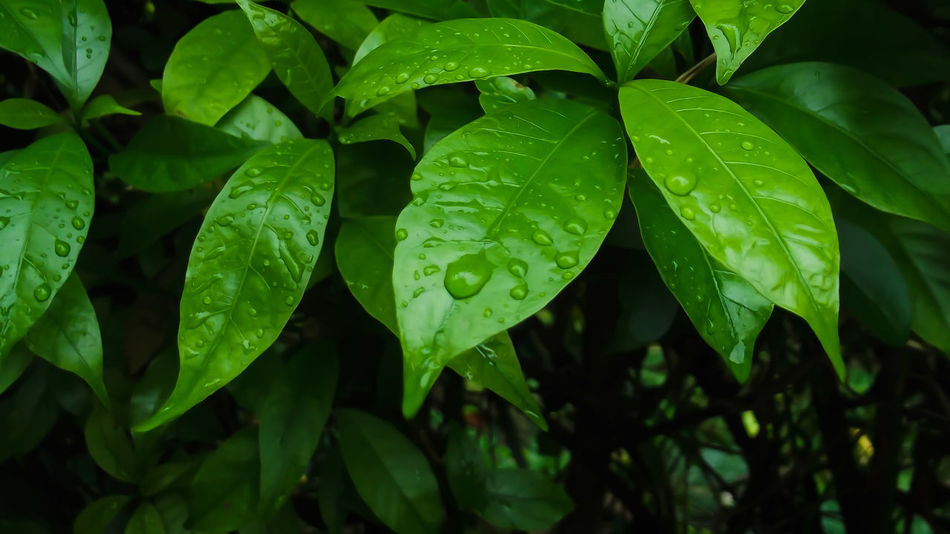 Green Leaf Nature Beauty In Nature Freshness
