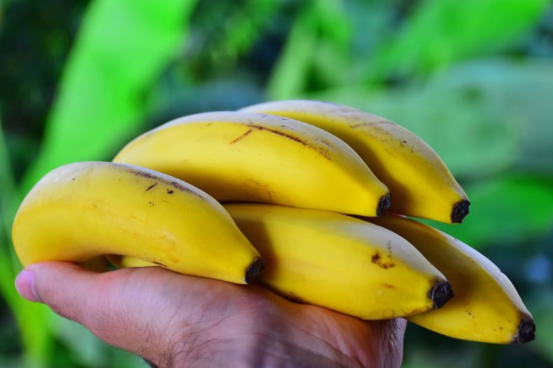 Cropped Hand Of Person Holding Yellow Bananas