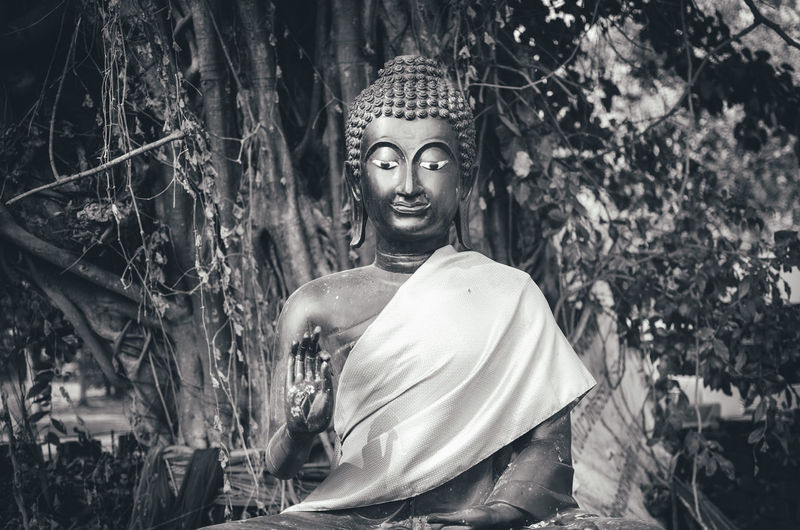 Close-up of buddha statue by tree