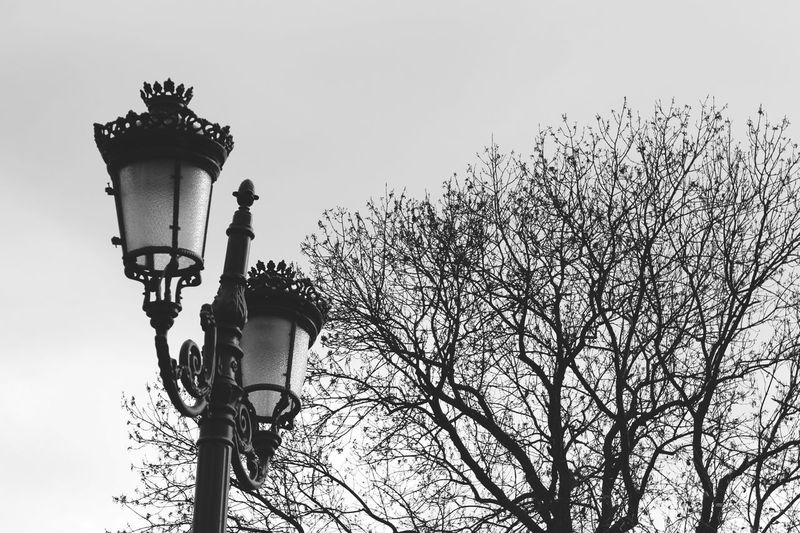 Street lamp Nature EyeEm Nature Lover EyeEmNewHere Blackandwhite Black And White Street Streetphotography Street Photography Tree Sky Street Light Branch